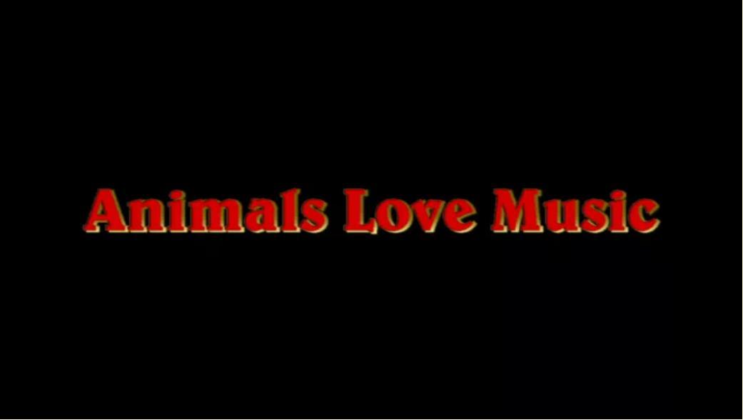 animals_love_music_thumbnail