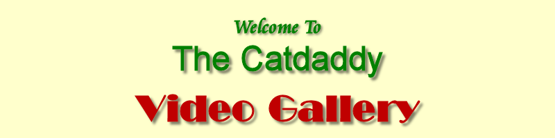 Catdaddy Video Gallery Banner